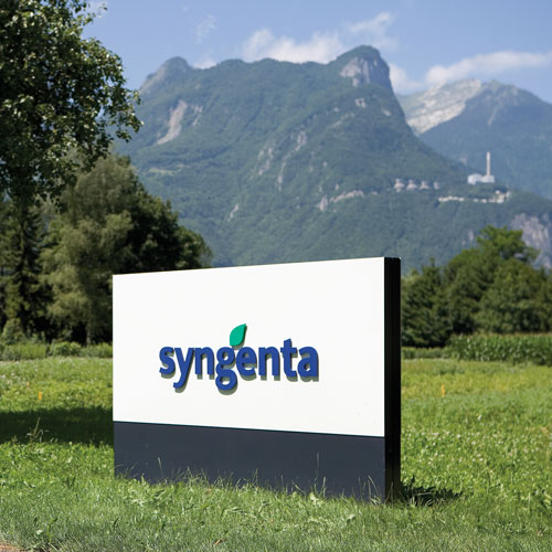 syngenta assume in diversi settori